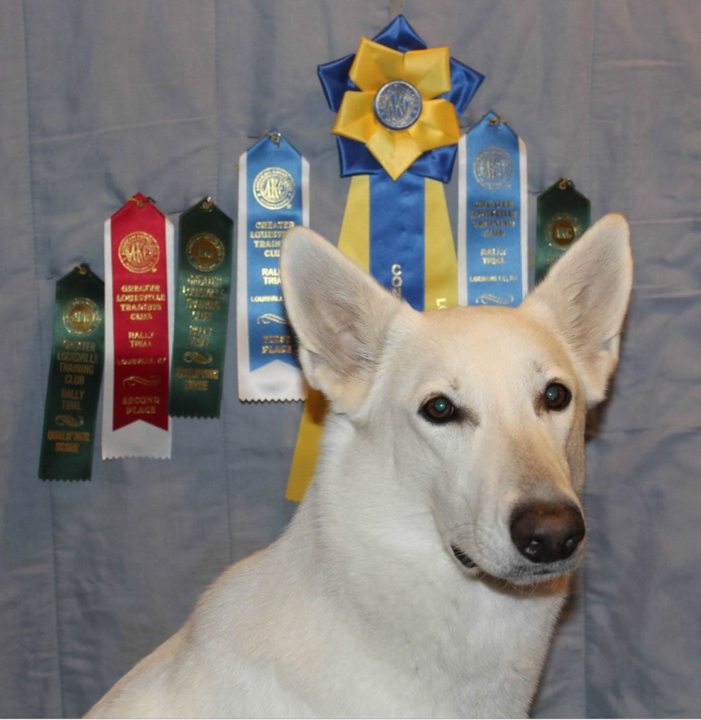 Shaui earned her AKC Rally Novice title